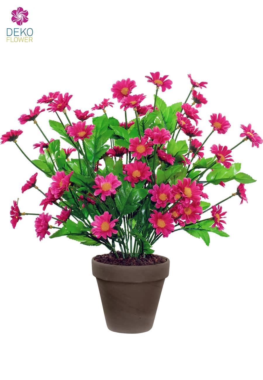 Margeritenbusch pink 42 cm