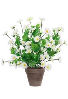 Margeriten Topfpflanze weiß 42 cm