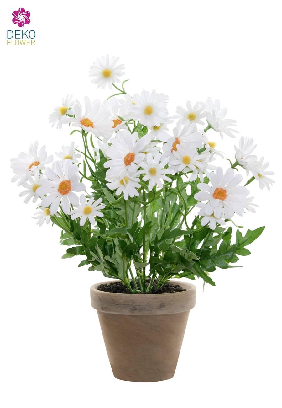 Künstliche Margeriten Topfblumen weiß 39 cm