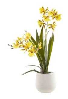 Künstliche Oncidium Orchidee in Keramikschale 38 cm