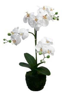 Künstliche Orchidee 57 cm weiß im Topf