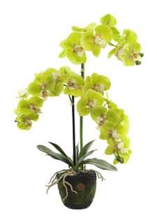 Künstliche Orchidee 65 cm in Erdballen grün