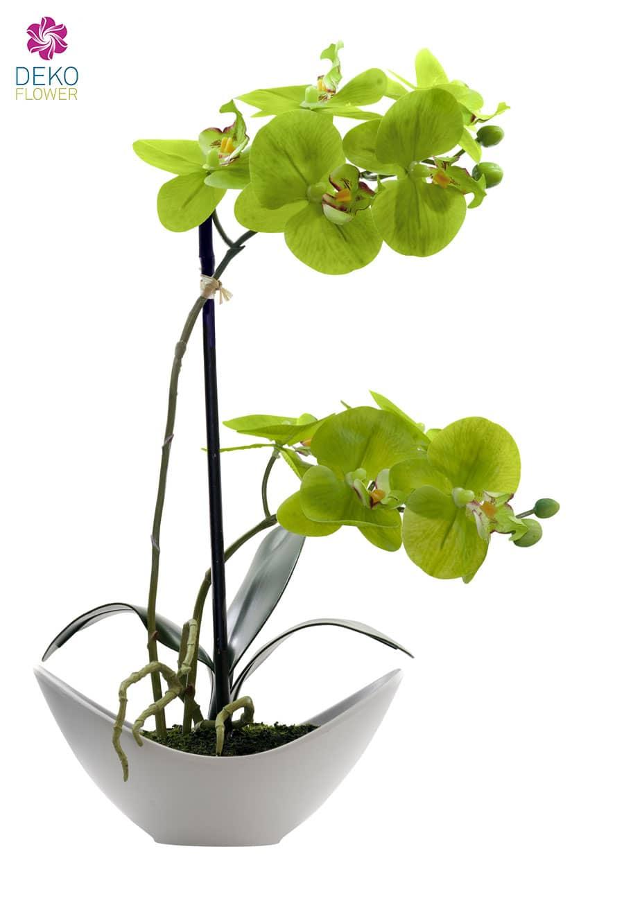 Künstliche Orchidee apfelgrün 36cm im weißer Schale