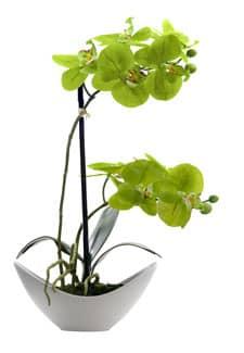 Künstliche Orchidee grün 36 cm in Schale