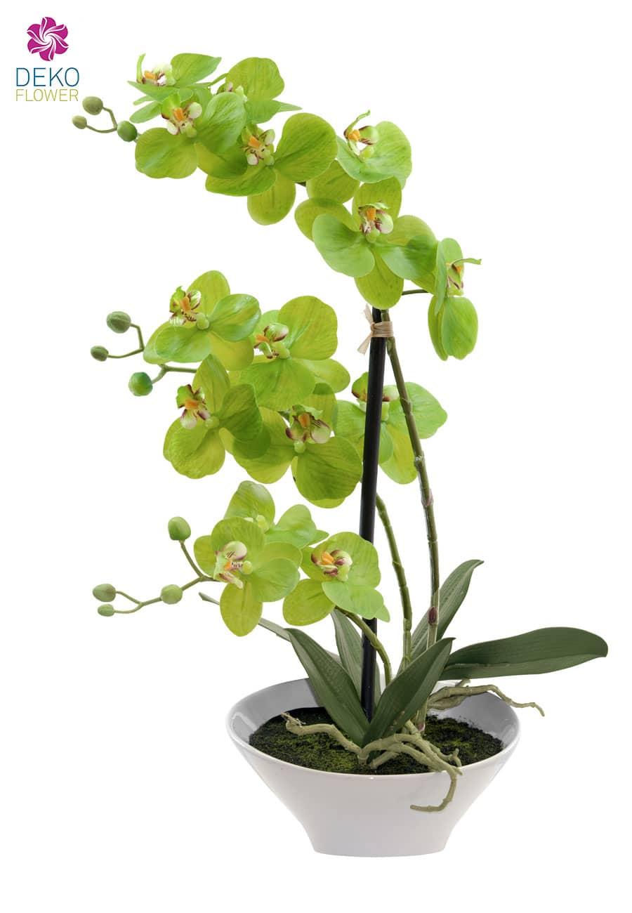 Künstliche Orchidee apfelgrün 44cm im weißer Keramik Schale