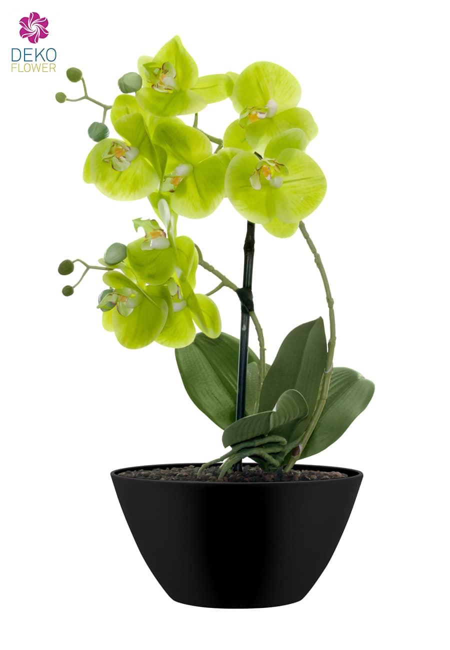 Kunstorchidee grün 47 cm im mattschwarzer Schale