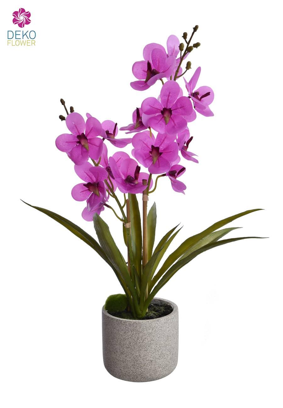 Künstliche Orchidee »Ascocenda« 50 cm pink