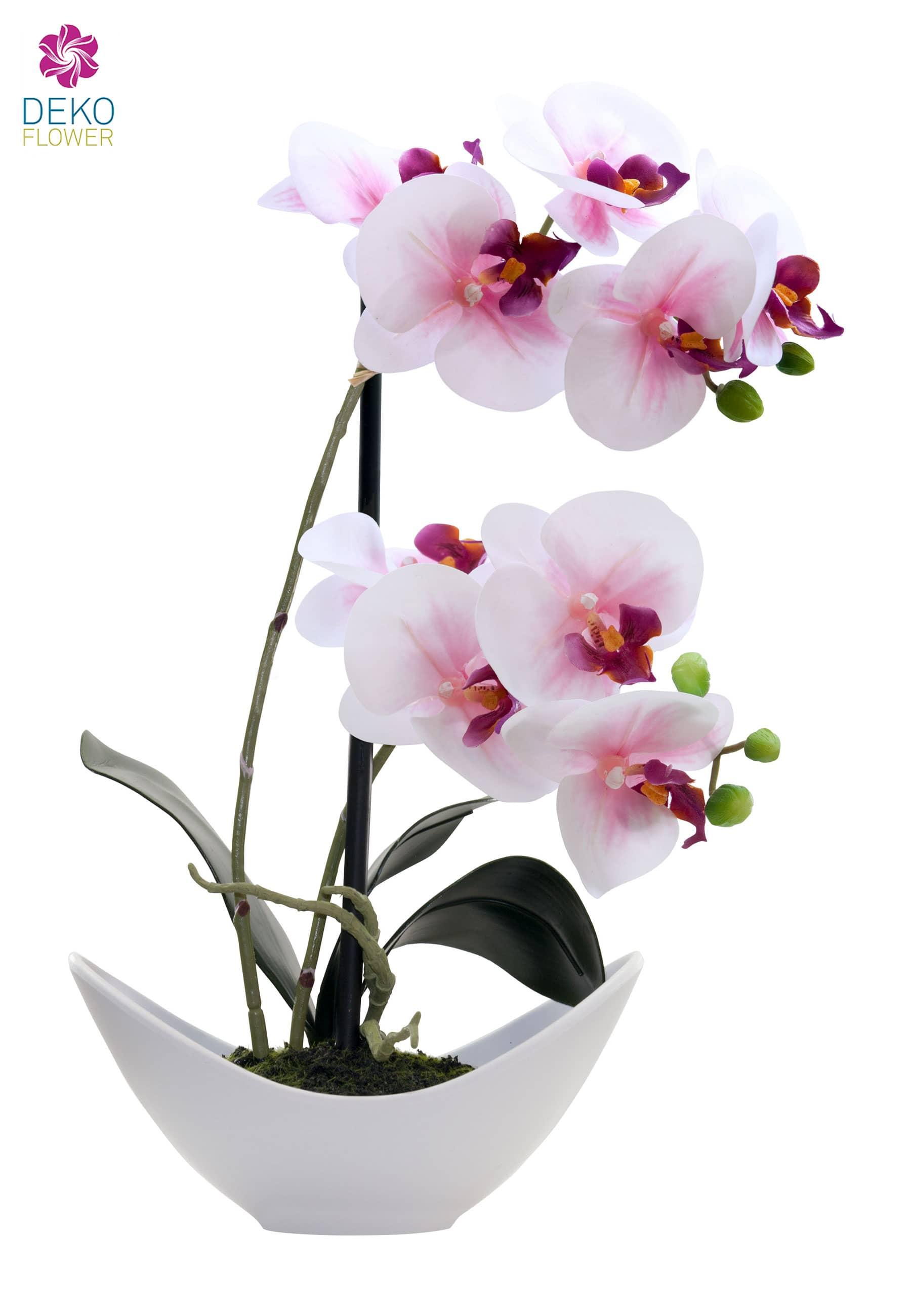 Künstliche Orchidee creme-pink 36cm im weißer Schale