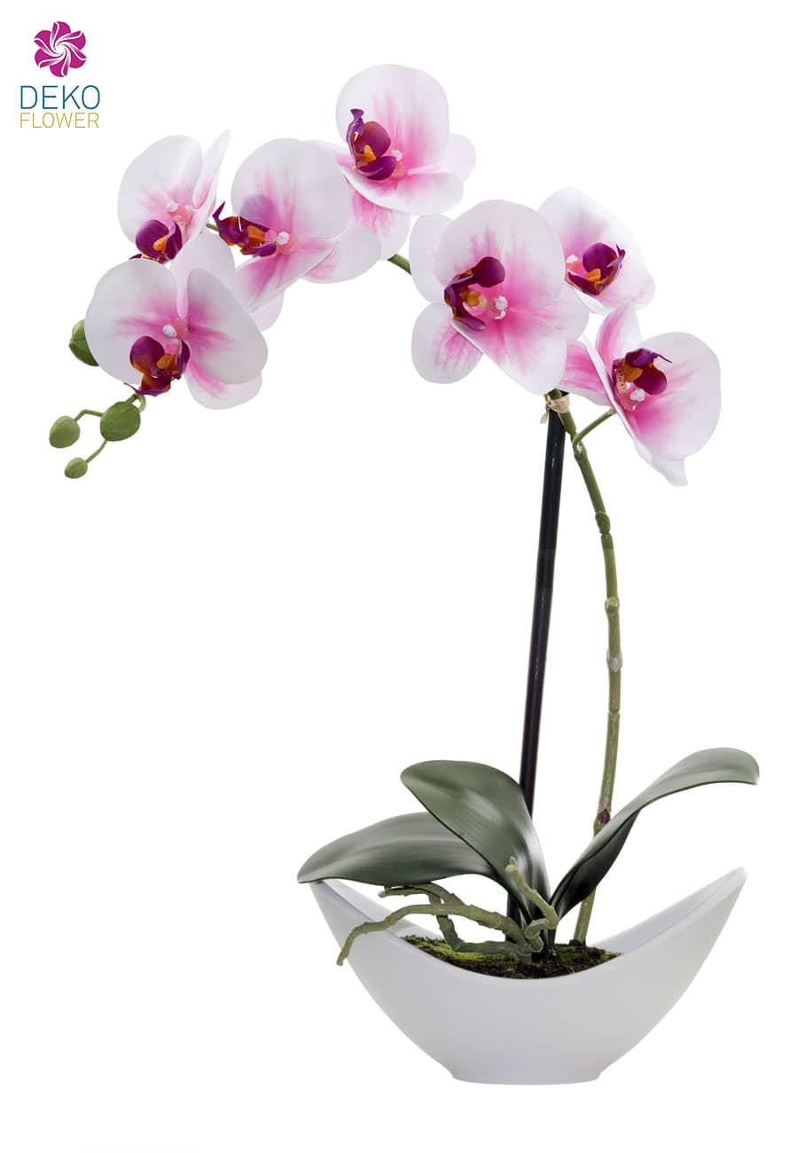 Künstliche Orchidee creme-pink 42cm im weißer Schale
