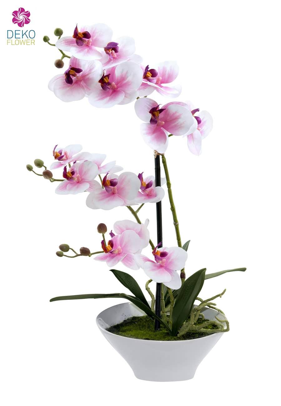 Künstliche Orchidee creme-pink 44cm im weißer Keramik Schale