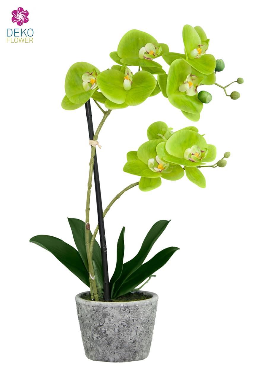 Kunstorchidee grün 50 cm im Steintopf