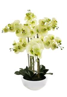 Künstliche Orchidee grün 72 cm »Real Touch«