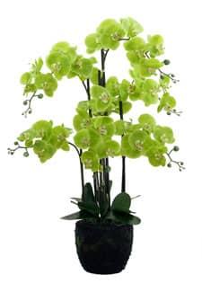 k nstliche orchideen von dekoflower kunstpflanzen. Black Bedroom Furniture Sets. Home Design Ideas