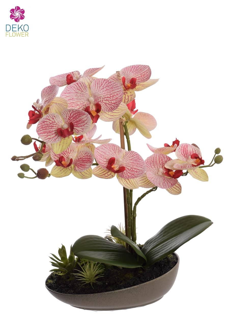 Künstliche Orchidee rot grün in Schale 40 cm