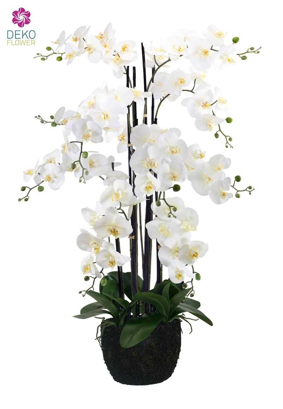 Orchideen Beleuchtung | kuenstliche orchidee weiss 115cm 56010195cr