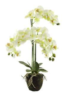 Künstliche Orchidee weiß grün auf Erdballen 65 cm