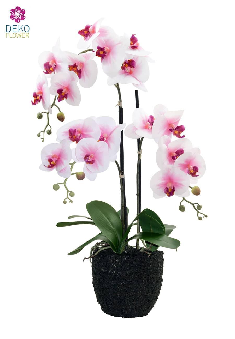 Kunstorchidee weiß rosa 75 cm in Erdballen