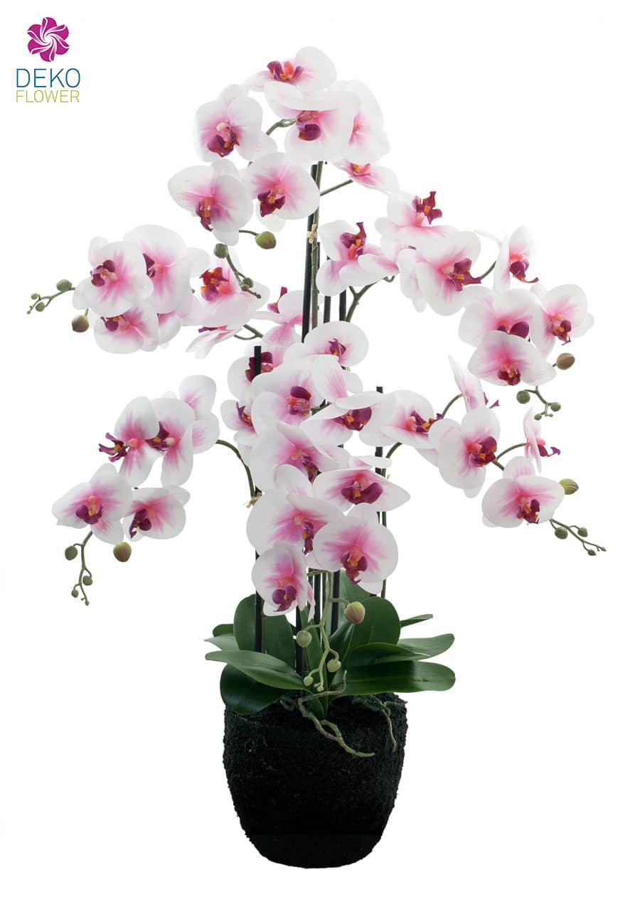 k nstliche orchidee 90 cm wei rosa. Black Bedroom Furniture Sets. Home Design Ideas