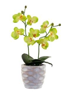 Künstliche Orchidee zart-grün im Steintopf 36 cm