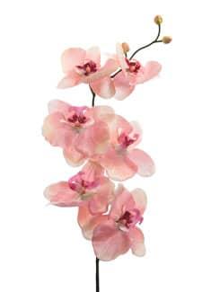 Künstliche Orchideenzweige apricot 77 cm 3er-Pack