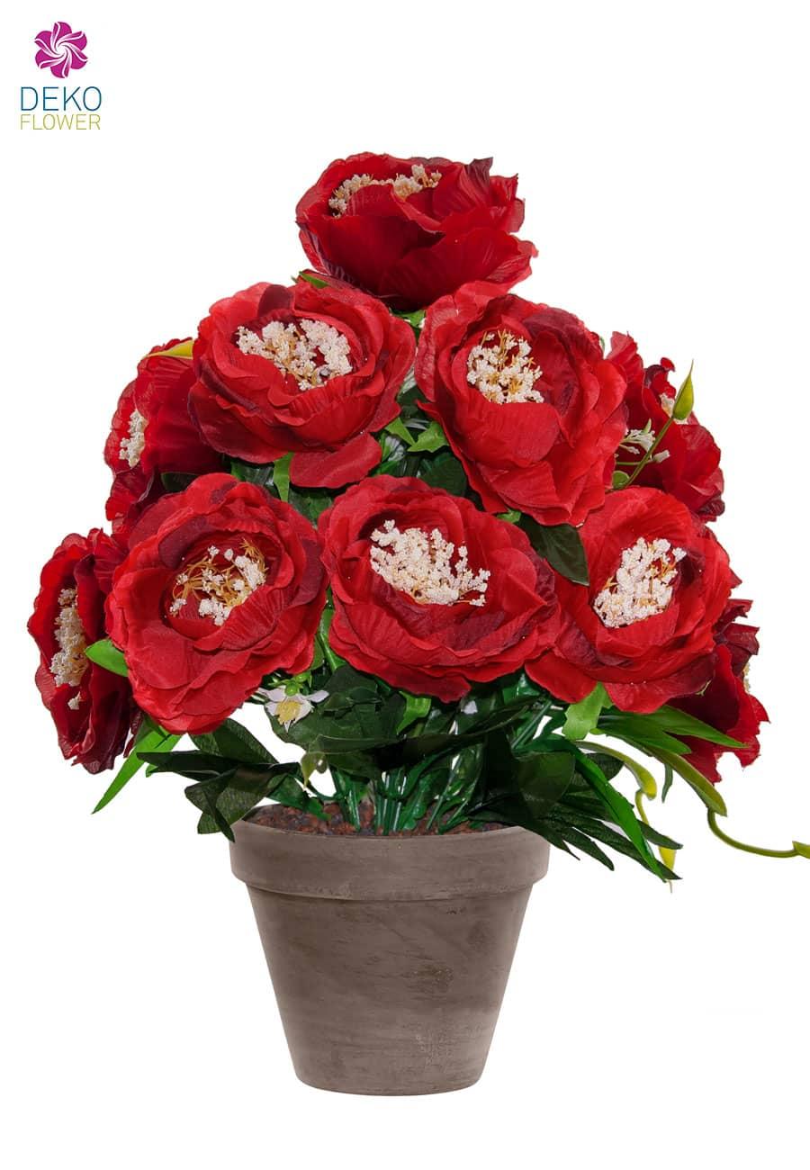 Pfingstrosen Topfpflanze rot 46 cm