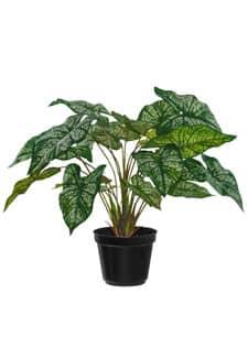 Kunstpflanze »Caladium Bi-Color« grün creme 34 cm