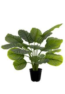 Künstliche Pflanze Calathea 74 cm