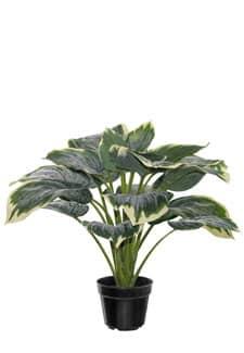 Künstliche Pflanze »Hosta« im Topf 46 cm