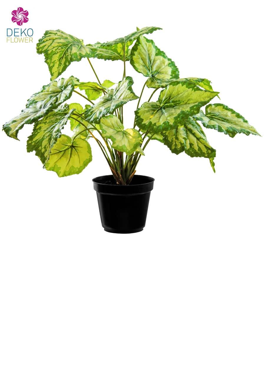 Kunstpflanze »Königs Begonie« gelb grün 34 cm