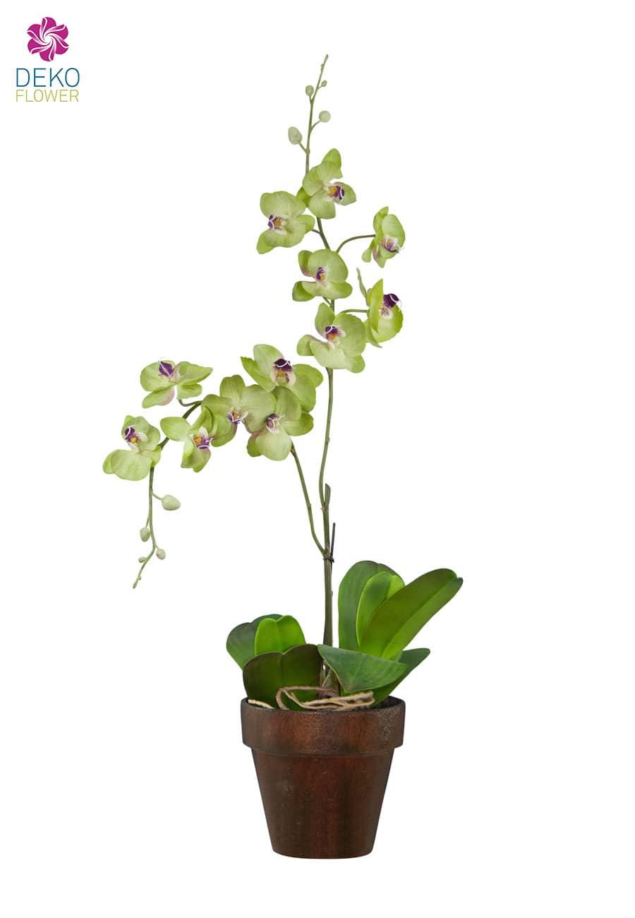 Künstliche Phalaenopsis Orchidee in grün 75 cm