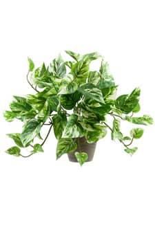 Künstliche Pothos Pflanze im Topf 30 cm grün gelb