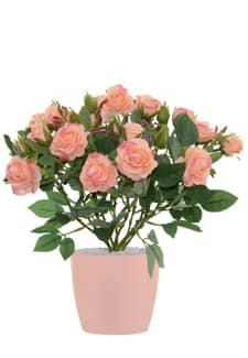 Künstliche Rosen apricot 27cm getopft