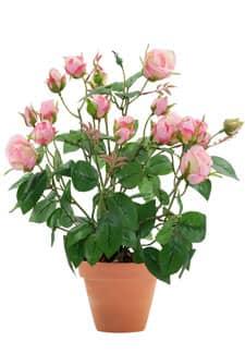 Künstliche Rosen im Topf rosa 40 cm