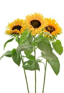 Künstliche Sonnenblumen 61 cm 3er Pack