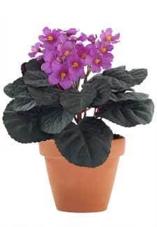 Künstliche Usambaraveilchen Topfblumen magenta 24 cm
