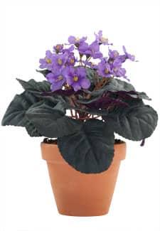 Künstliche Usambaraveilchen Topfblumen violett 24 cm