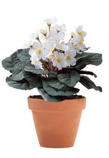 Künstliche Usambaraveilchen Topfblumen weiß 24 cm