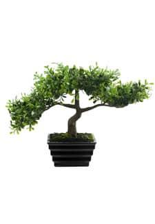 Künstlicher Bonsai »Eukalyptus Baum« 23 cm