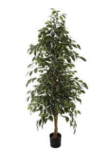 Künstlicher Ficus 220 cm grün creme