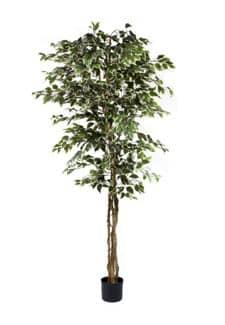 Künstlicher Ficus Baum 190 cm weiß grün