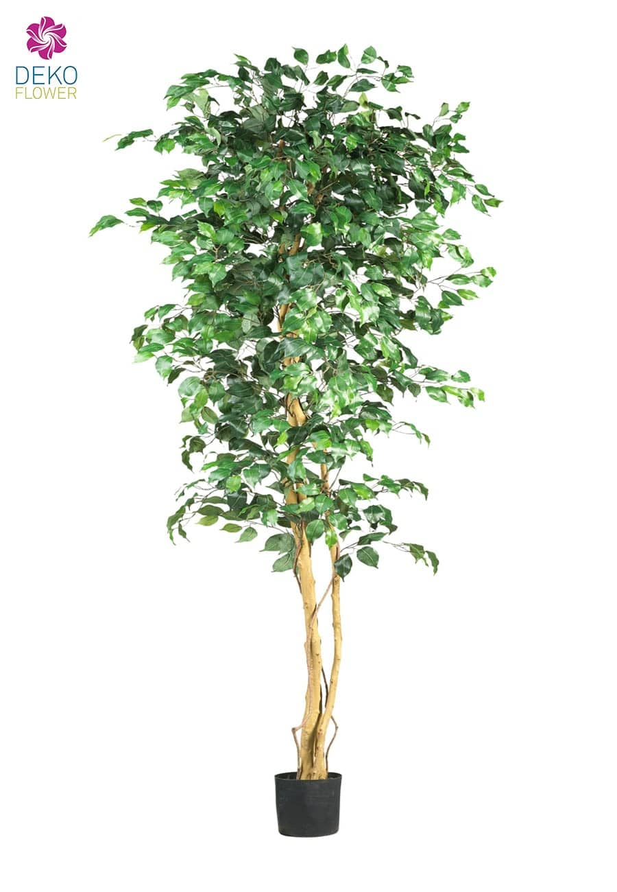 k nstlicher ficus benjamini baum gr n 220 cm. Black Bedroom Furniture Sets. Home Design Ideas