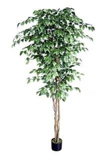 Künstlicher Ficus Benjamini Baum grün weiß 220 cm