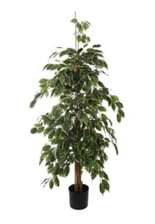 Künstlicher Ficus Baum Exotica grün creme 150 cm