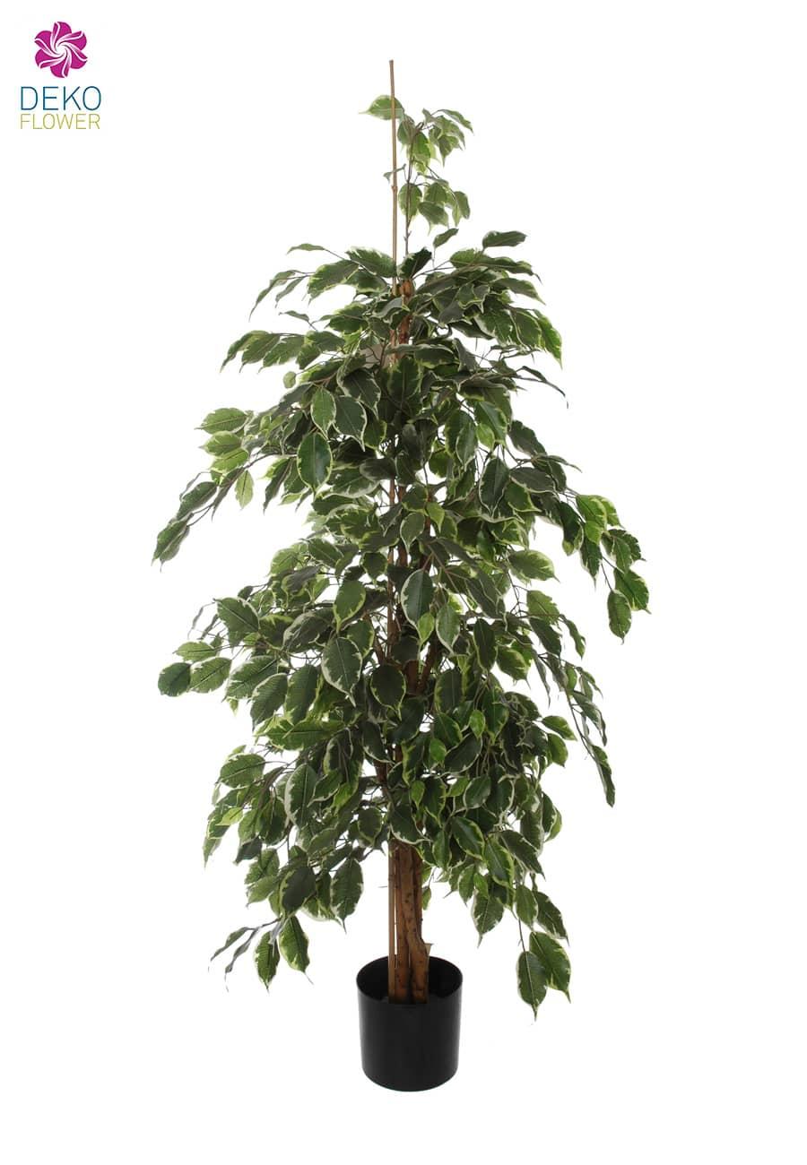 Künstlicher Ficus Baum Exotica grün creme 155 cm