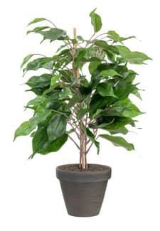 Künstlicher Ficus grün getopft 40cm