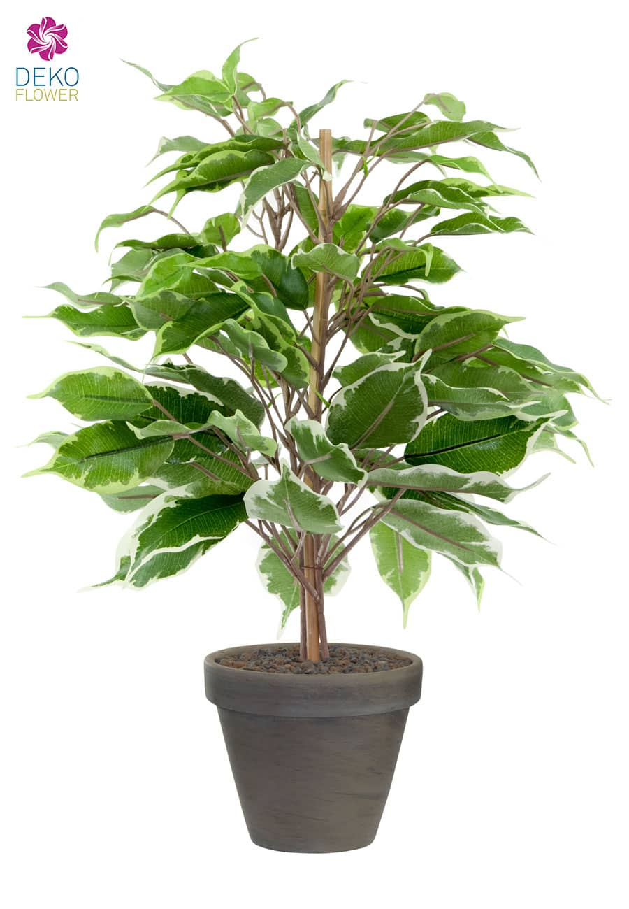 Künstlicher Ficus grün creme 40 cm