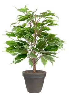 Künstlicher Ficus grün-gold getopft 40cm