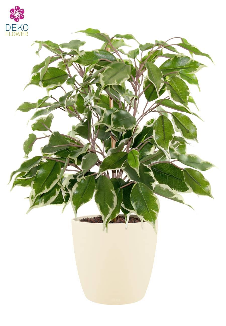 Künstlicher Ficus grün creme 42 cm