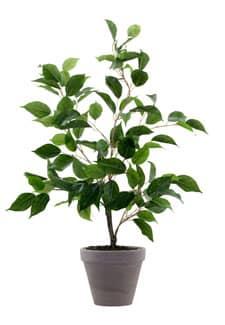 Künstlicher Ficus Benjamini im Tontopf 60cm