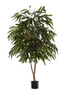 Künstlicher Ficus Longifolia Baum 240 cm